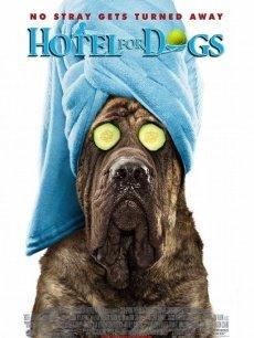 《流浪狗之家》海报